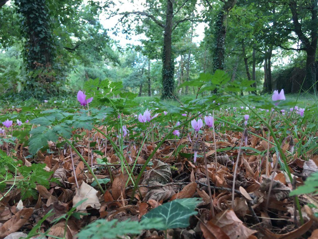 Réserves fleurs arbres parc maisons-laffitte biodiversité
