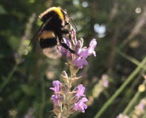 abeilles fleurs parc